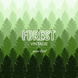 Vintage forest tree seamles design template. Vector illustration Royalty Free Stock Photography