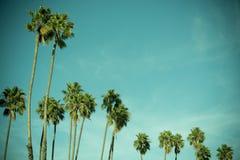Vintage, foto cruz-procesada de palmeras Fotografía de archivo libre de regalías