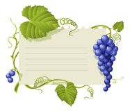 Vintage frame with cluster grapes and green leaf. Illustration isolated on white background stock illustration
