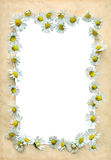 Vintage frame with daisies Royalty Free Stock Photos