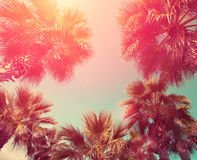 Vintage frame with tropic palm trees. Against sky at sunset light Stock Photography