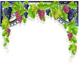 Vintage frame with wine and grapes Royalty Free Stock Photos
