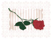 Vintage framed rose Royalty Free Stock Images