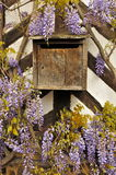 Vintage French Mailbox and Wisteria Sinensis Stock Images