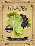 Vintage Fresh Grapes Poster Stock Images