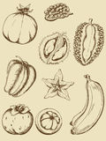 Vintage fruits royalty free stock photos