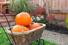 Vintage Garden basket with small pumpkins. Autumn harvest, thanksgiving, halloween concept. healthy diet food. Selective focus. Co. Py space royalty free stock photography