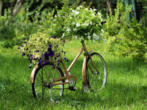 Vintage garden bicycle Royalty Free Stock Image