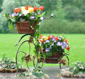 Vintage garden bicycle. With tulips and other flowers Royalty Free Stock Photo