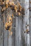 Vintage garden vines on plank Stock Photo