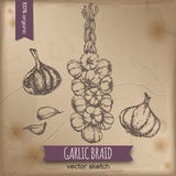 Vintage garlic braid template. Placed on old paper background. Great for markets, grocery stores, organic shops, food label design Royalty Free Stock Image