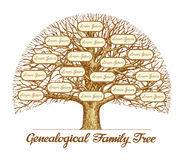 Vintage Genealogical Family Tree. Hand-drawn sketch vector illustration Stock Image