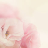 Vintage gentle flowers background Stock Photo