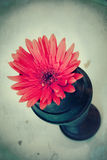 Vintage Gerbera royalty free stock photos