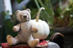 Vintage German teddy bear with pumpkin royalty free stock images