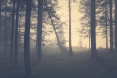 Vintage gloomy forest. With fog stock image