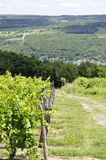Vintage Grape Vinyards and Valley Stock Photo
