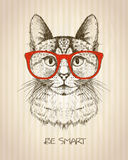Vintage graphic poster with hipster cat with red glasses. Vintage graphic poster with hipster cat with red glasses, against old paper striped backdrop, be smart Stock Photos