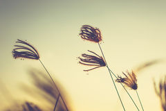 Vintage Grasses Royalty Free Stock Images