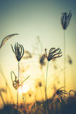 Vintage Grasses Royalty Free Stock Photography
