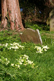 Vintage Grave Marker. In a meadow stock photography