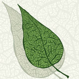 Vintage green leaf Stock Photo