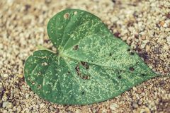 Vintage  green leaf on sand  background Royalty Free Stock Photos
