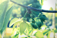 Vintage green leaves plant. Royalty Free Stock Photos