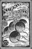Vintage Greengrocer - Turnip Advertising Blackboard. Detailed illustration of a Vintage Greengrocer - Turnip Advertising Blackboard Stock Photo