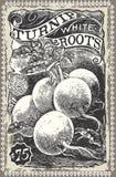 Vintage Greengrocer - Turnip Advertising. Detailed illustration of a Vintage Greengrocer - Turnip Advertising Stock Photos