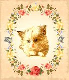 Vintage greeting card. With  fluffy kitten Stock Images