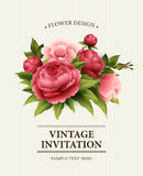 Vintage  Greeting Card with Blooming peony and rose Flowers.  Vector Illustration Royalty Free Stock Image