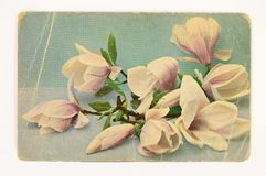 Vintage greeting card with flowers stock illustration