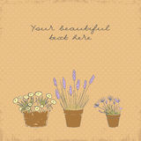 Vintage greeting card with the pot plants collection Stock Image