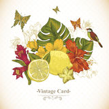 Vintage Greeting Card Tropical Fruit, Flowers. Butterfly and Birds, Vector Illustration. Lemon and Hibiscus Stock Images