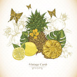 Vintage Greeting Card Tropical Fruit, Flowers. Butterfly, Vector Illustration. Pineapple and Lemons Royalty Free Stock Photo