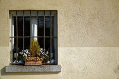 Vintage grill window and dry flower in flowerpot on window sill, sunny day, italy style.  Royalty Free Stock Photos