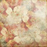 Vintage Grunge Background Pansy 135 Royalty Free Stock Image