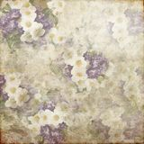 Vintage Grunge Background Purple White Flowers 131 Stock Image