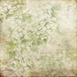 Vintage Grunge Background Soft Green White 144 Royalty Free Stock Photography