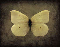 Vintage Grunge Butterfly. Vintage sepia yellow grunge butterfly stock photography