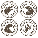 Vintage grunge labels with animals and birds negative space Royalty Free Stock Image