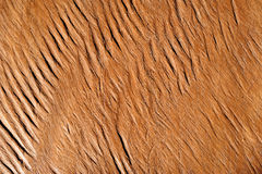 Vintage or grungy brown background of natural wood Royalty Free Stock Image