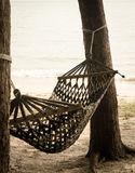 Vintage hammock on pine tree Royalty Free Stock Photography