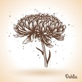 Vintage hand drawing background with flowers. Stock Image