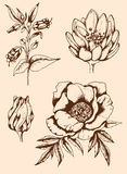 Vintage hand drawn flowers Royalty Free Stock Photography