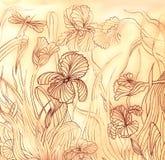 Vintage hand-drawn iris flowers Stock Photos