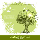 Vintage hand drawn olive tree and olive branch Royalty Free Stock Photo