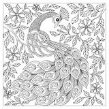 Vintage hand drawn pattern black and white doodle peacock. Stock Photography