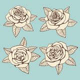 Vintage hand drawn roses with leaves vector design. Vintage hand drawn roses with leaves design. Vector flat illustration Stock Photography